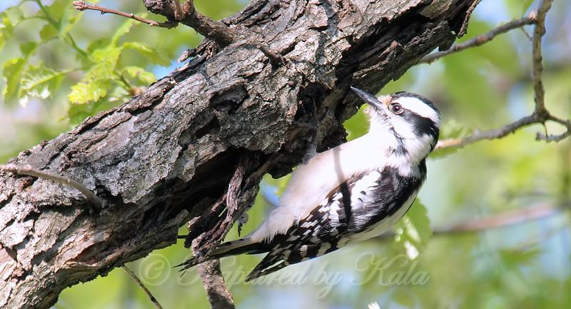 Woodpecker Heaven