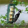 Junior At The Suet View 2