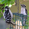 Now We Both Have Suet On Our Beaks