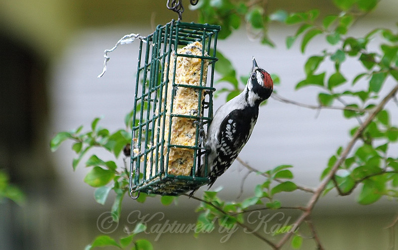 Junior At The Suet View 1
