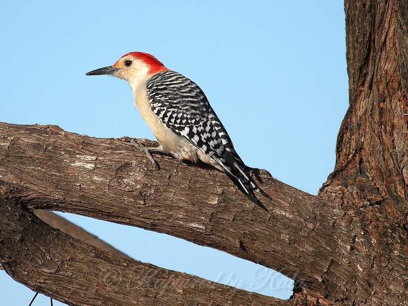 Three Views Of This Beautiful Bird  II