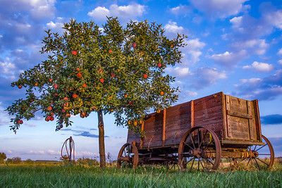 A Wagonload of Apples.