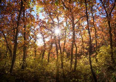 San Juan National Forest, CO