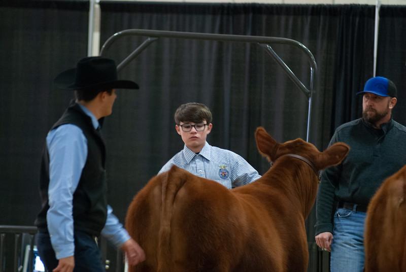 20190306_ww_cattle015