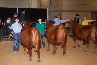 20190306_ww_cattle012