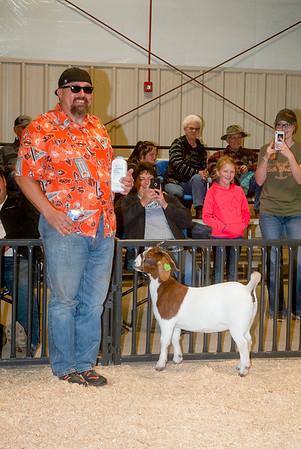 ww_goats_20191102_adults-15
