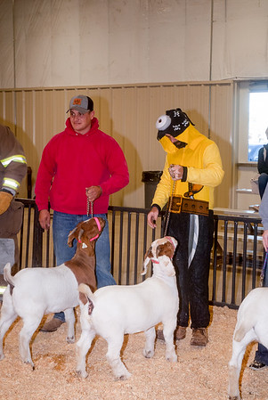 ww_goats_20191102_adults-5