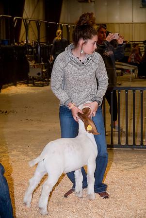 ww_20191102_wether_goats-dams-9