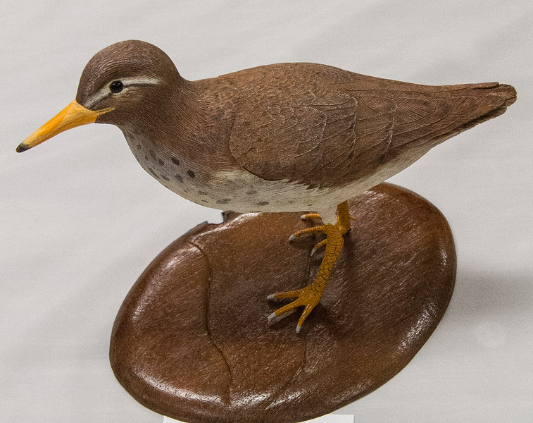 Roger Anderson - Spotted Sandpiper - Bass Wood