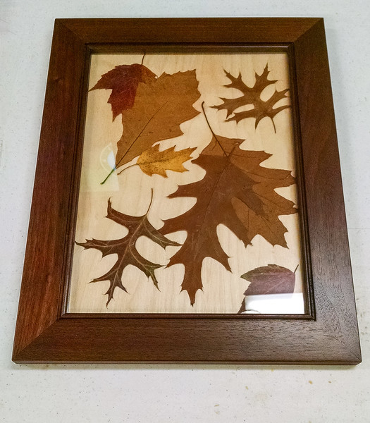Butch McClintic made this Fall Leaf Picture  Nov 2016