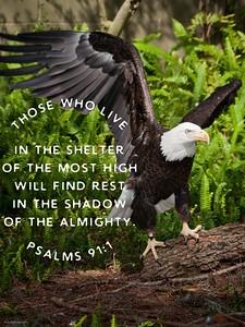 Psalms 91:1 NLT