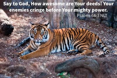 Psalms 66:3 NLT