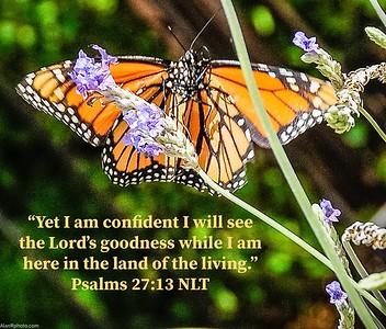 Psalms 27:13 NLT