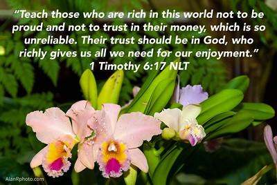 1 Timothy 6:17 NLT