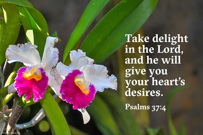 Psalms 37:4 NLT