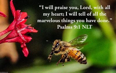 Psalms 9:1 NLT