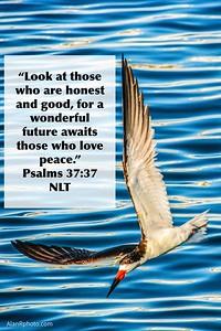 Psalms 37:37 NLT