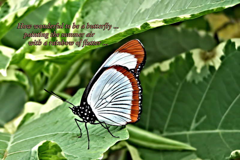 Butterfly Life