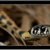 Snake_cropped_framed750