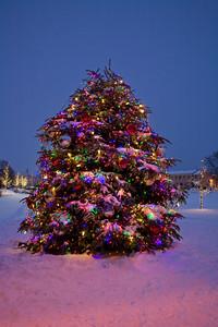 Lighted Christmas Tree, Dane County, Wisconsin