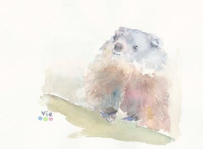 No 88 La petite marmotte