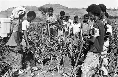 Training in Pesticide Application for Ethiopian Farmers, 1986