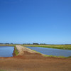Here are the shrimp ponds just behind the shrimp shack