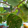 This tree at the shrimp shack was neat, everyone had carved something in the leaves. Vegetal cruelty, I know...