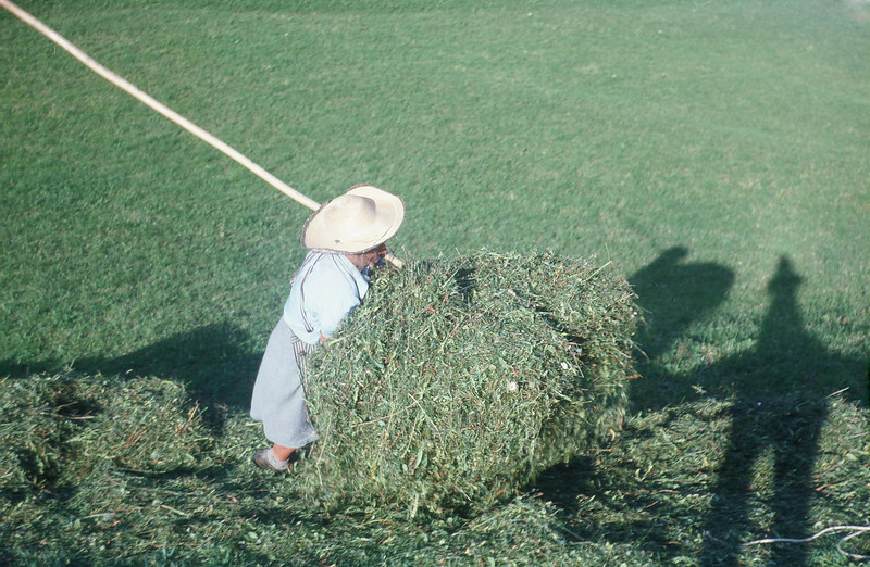 The hay being carried to the tarp.