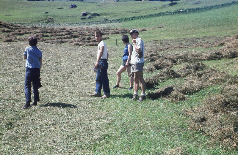 Hay laying cut in the field.  Cheryl Rogers, Allen Hye, Christel Schulz, Dick van Norren.