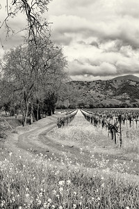 Between Storms, Yountville Mill Road, Yountville, California
