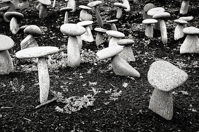 Stone Mushrooms, Yountville, California