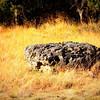 A Volcanic Rock?