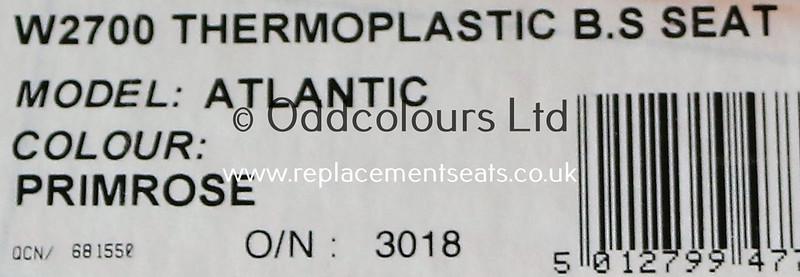Atlantic-Primrose-11b