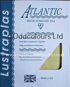 Atlantic-Primrose-12d