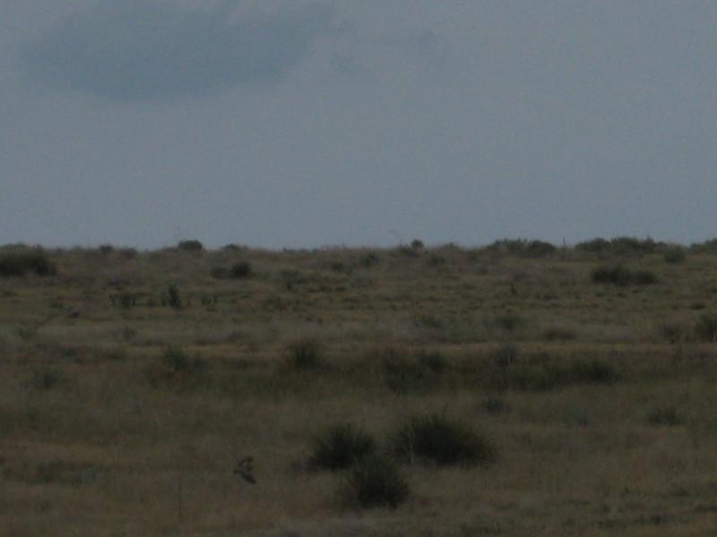 GPS Field Campaign, Rio Grande Rift Project, Eastern Colorado, July 2008<br /> <br /> Tr-corner<br /> <br /> blury Borrowing Owl