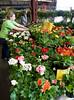 Home & Garden Idea Show pictures
