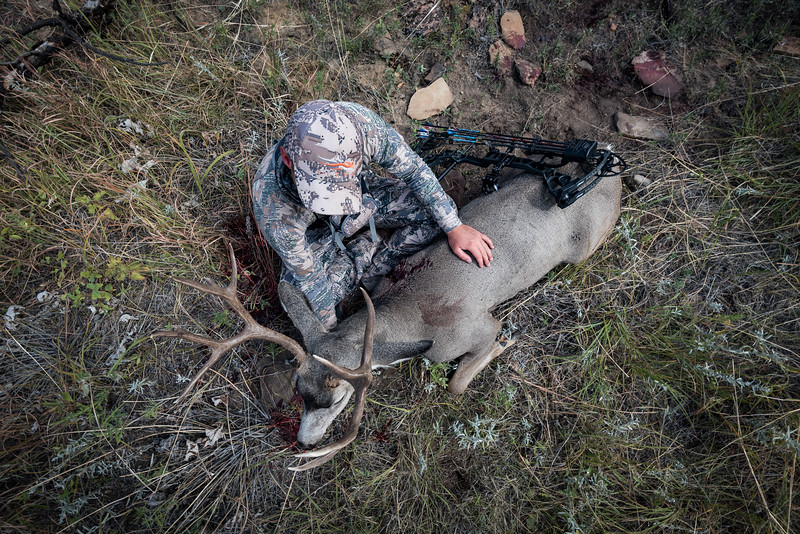 Montana archery mule deer hunt. Hunter Matt McCormick.