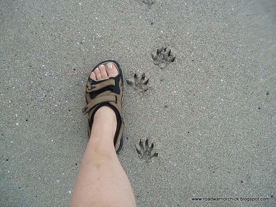 Toes - human and not.