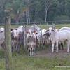 Costa Rica roadside capture
