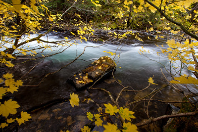 Marion Creek in Fall