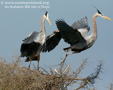 2008 Spring Workday—Birds