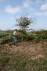 Able De Leon clears out the weeds and brush around the oak trees planted near the tractor shed, followed by fertilizing and watering. <br><em>Photo credit: Marcy Spears</em>