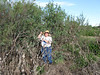 Lynn is standing at one of the old pond areas surrounded by Salt Cedars.  She is showing how large the trees were when they were planted four or five years ago. Now they are ten to twelves feet tall.<br><em>Photo credit:  Unknown</em>