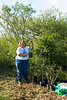 In the Ebony grove, Lynn holds up a new tree to illustrate how small the trees in the background were when they were first planted. Four or five years later they are 10-12 feet high and already being used as nesting sites.<br> <em>Photo credit:  Diane Nunley</em>