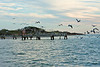 Brown Pelicans leaving the dock area.  I think the pelicans believe the dock was built for them—not the boats<br><em>Photo credit:  Diane Nunley</em>