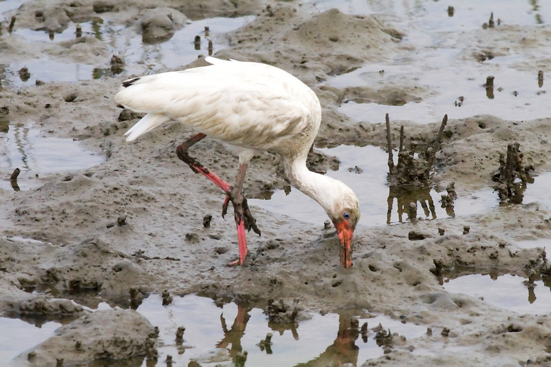 why I hate egrets......they look like this a lot at this time of year!!!  Dirtiest birds I ever saw!<br /> but I might post it!