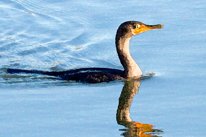 cormorant: watercolor filter<br /> I have NOT run it thru Noise Ninja, I could.......