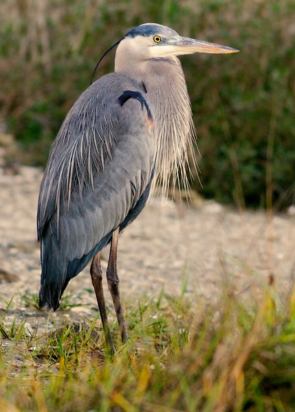Thusie's GBH gone south!