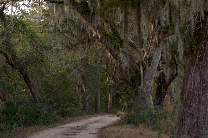 Dirt Road: Long walk home.<br /> Santee Coastal Preserve<br /> South Carolina<br /> 2/4/2007